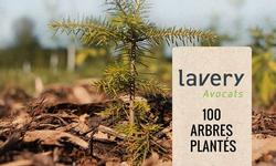 Lavery finances the planting of 100 trees in the Montréal area