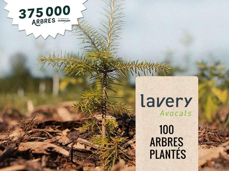 375000 arbres
